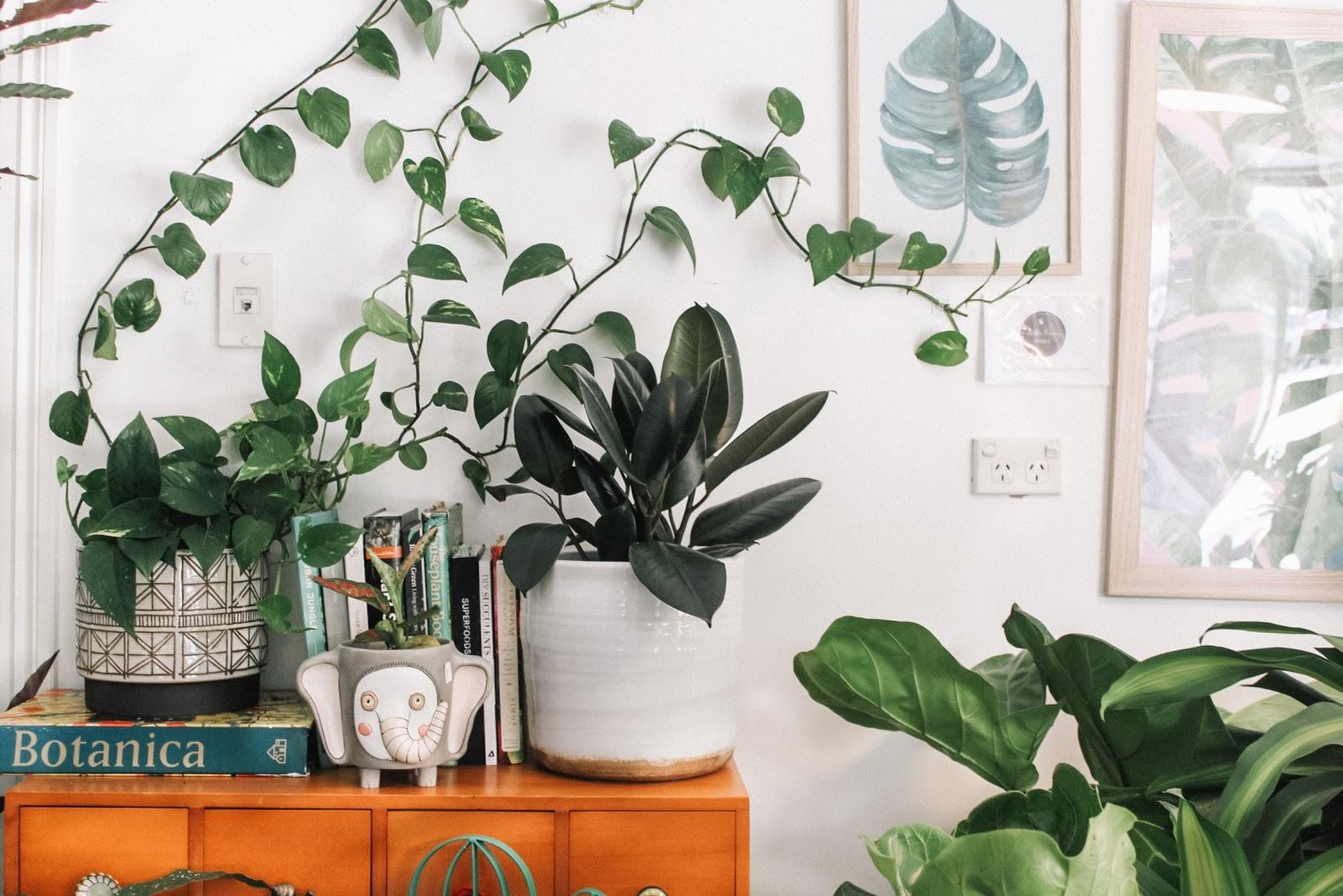 an assortment of plants on an apartment desk