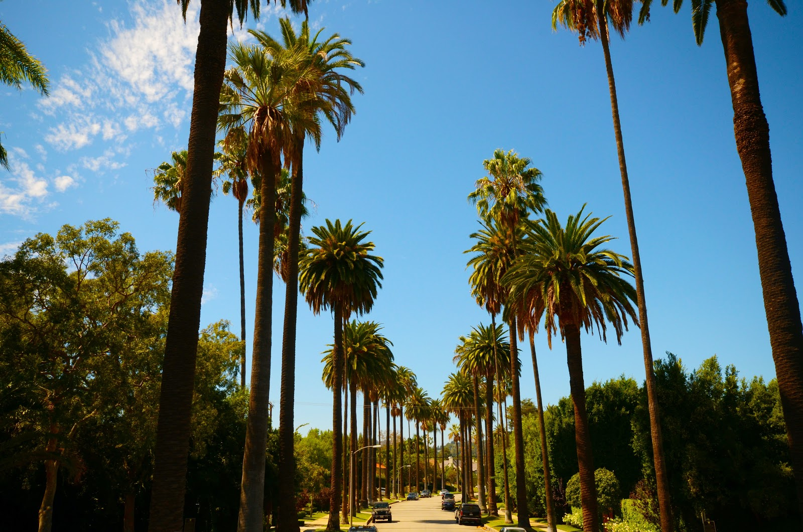 Palm trees in perfect line in Los Angeles