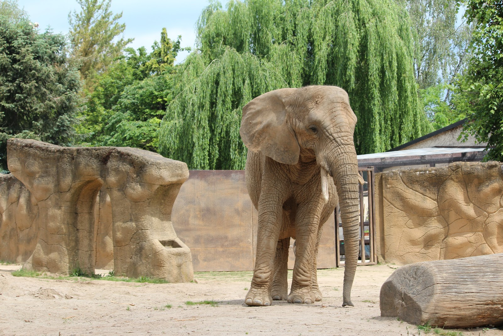 elephant at a zoo