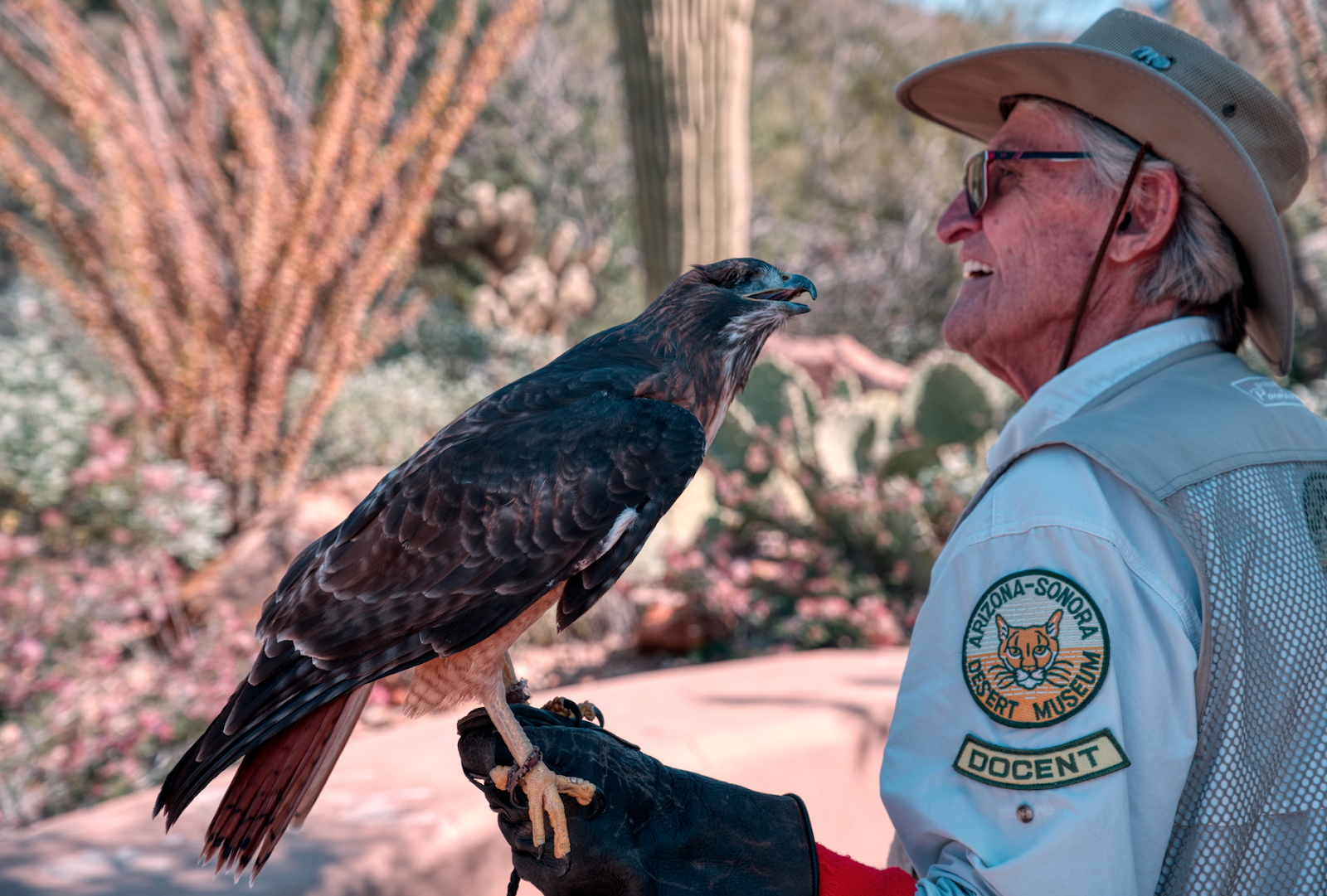 Guy holding a hawk in Arizona-Sonora Desert Museum